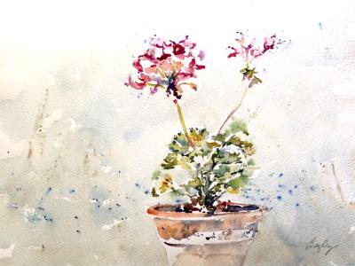 Diane's Geraniums