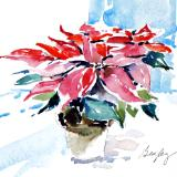 Poinsettia on Table